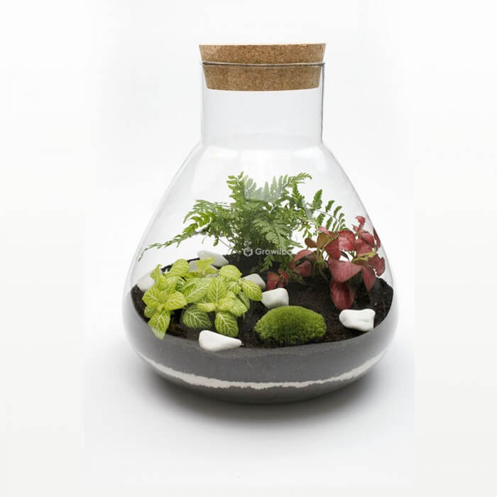 Zestaw 31cm paproć z fitonią Forest in a jar DIY kits