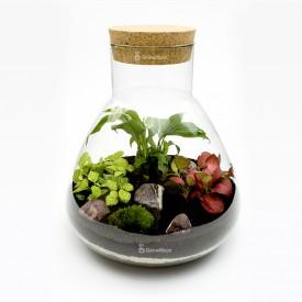 Set aus 31cm Schachtelhalm mit Phytonia-Kirschkieselwald in einem DIY-Glas