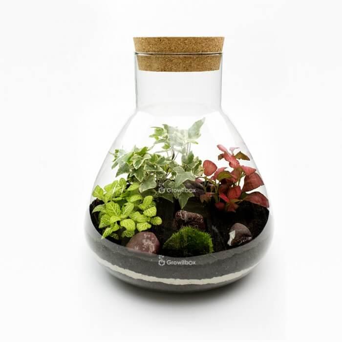 Zestaw 31cm bluszcz z fitonią otoczak cherry Forest in a jar DIY kits