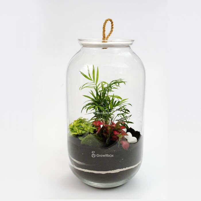 Jar 42 cm Palm with fitonia red, green macedonian stone Forest in a jar DIY kits