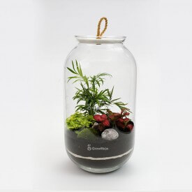 Jar 42 cm Palm with fitonia red, green cherry pebble Forest in a jar DIY kits