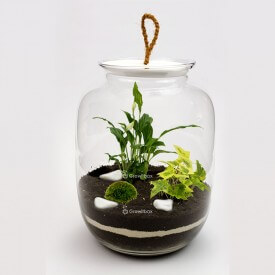 Jar 32cm with Spathiphyllum yellow ivy macedonian stone DIY kits