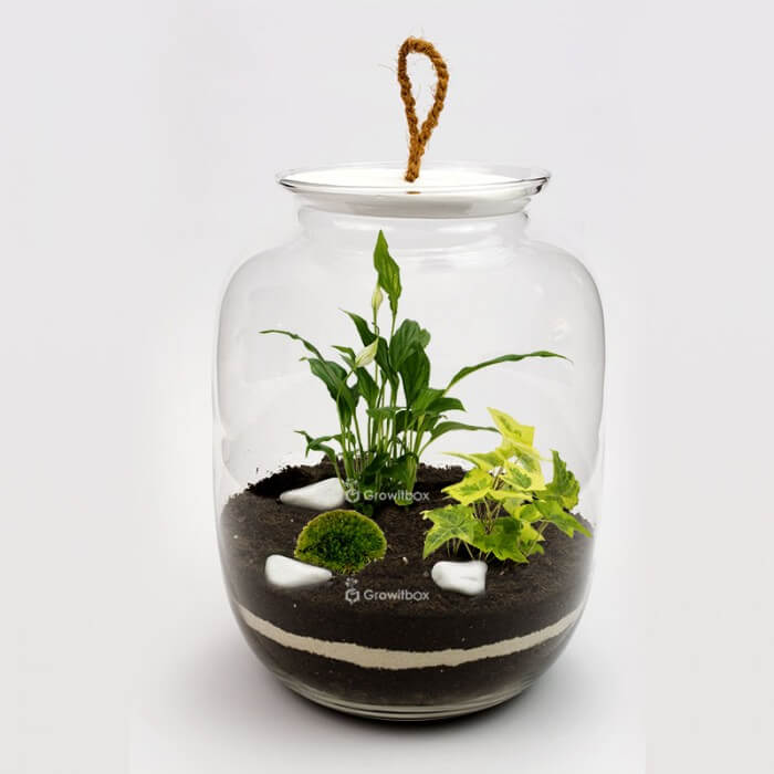 Jar 32cm with Spathiphyllum yellow ivy macedonian stone DIY kits