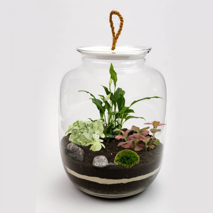 Jar 32cm with Spathiphyllum, red fitonia cherry stone Forest in a jar DIY kits