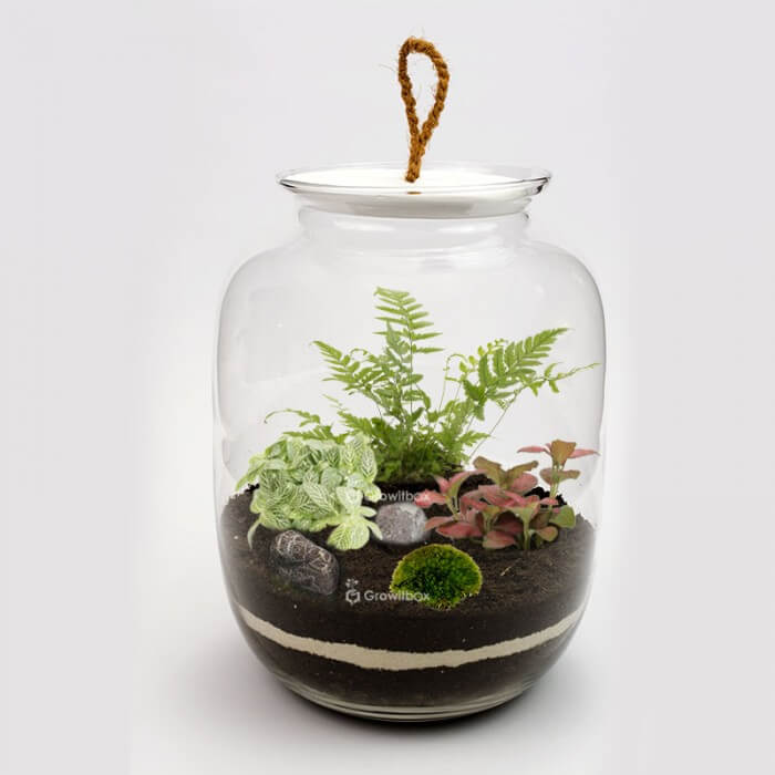jar 32cm with fern, red fitonia cherry stone DIY kits