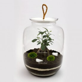 Jar 32cm Ficus Macedonian stone DIY kits