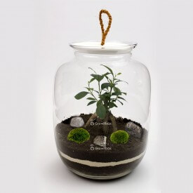 Jar 32 cm Ficus cherry pebble Forest in a jar DIY kits
