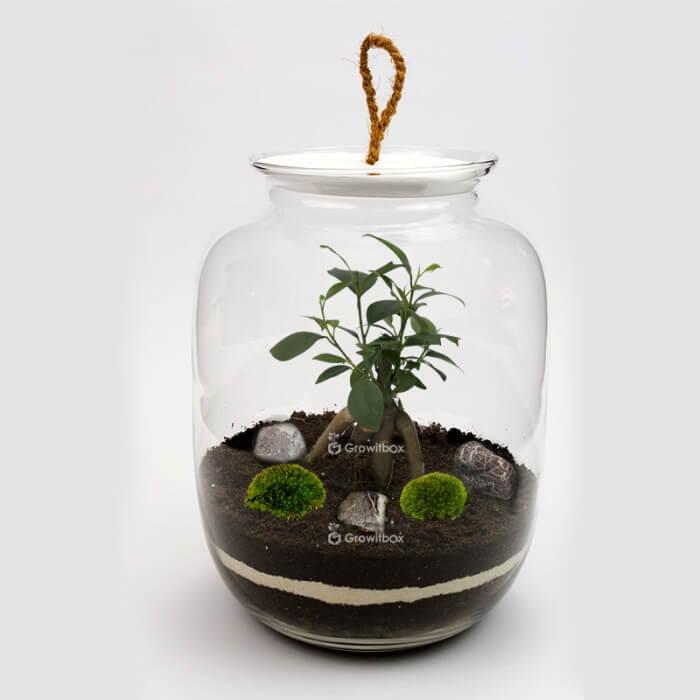 Jar 32 cm Ficus cherry pebble Forest in a jar DIY kits
