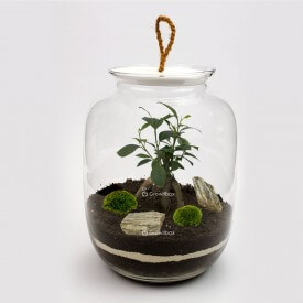 Jar 32cm Ficus stone bark Forest in a jar DIY kits