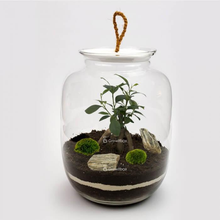 Jar 32cm Ficus stone bark DIY kits