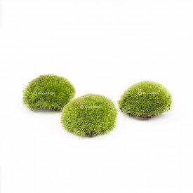 Cushion moss 3-6cm Home