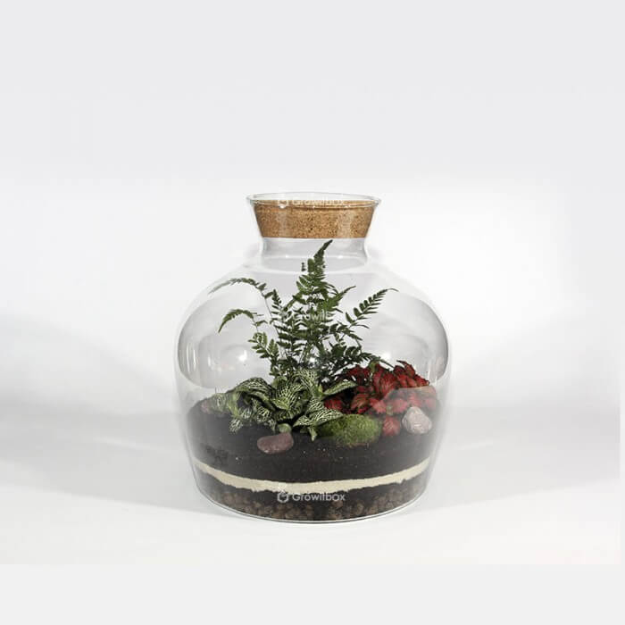 A set of 30cm fern with fittonia Forest in a jar DIY kits