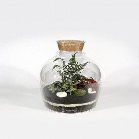 Set 30cm Farn mit Phytonia Mazedonischer Wald im Glas DIY