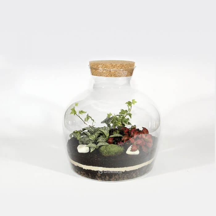 A set of 30cm ivy with fittonia Forest in a jar DIY kits
