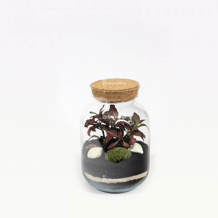 Set 24cm jar with red fitonia and cherry stone Home