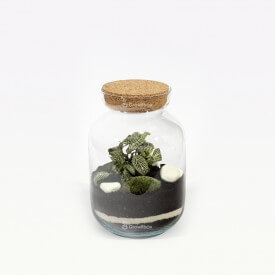 Set 24cm with green phytonia Macedonian Forest in a jar DIY kits