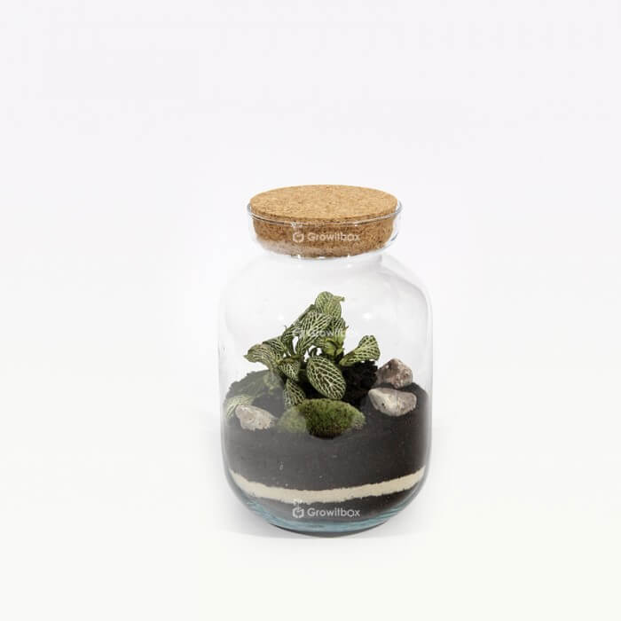 24cm set with green fiton cherry pebble Forest in a jar DIY kits