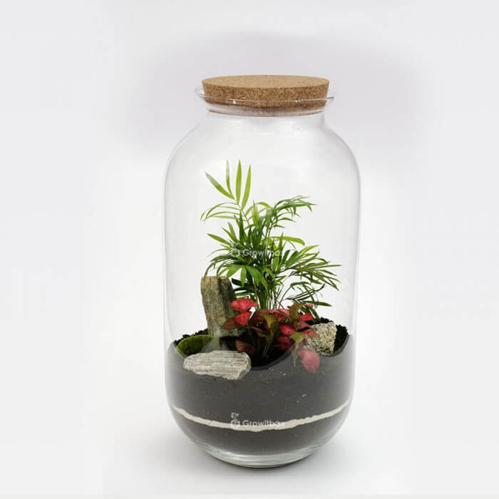Jar 42 cm Palm red fitonnia with stone bark Forest in a jar DIY kits