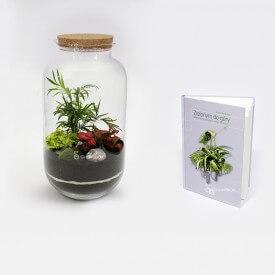"""Kit de palmeras2 con el tutorial """"Green Up"""" Bosque de bricolaje en un tarro"""