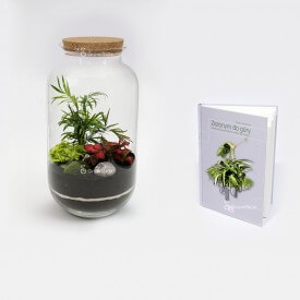 "Palm set2 with the guide ""Green up"" Forest in a jar DIY kits"