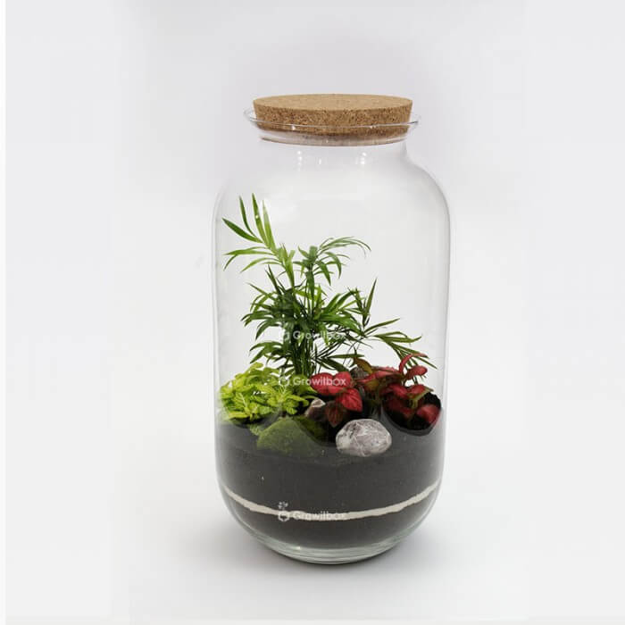Jar 42 cm with palm, red and green fitonia, cherry stone Forest in a jar DIY kits