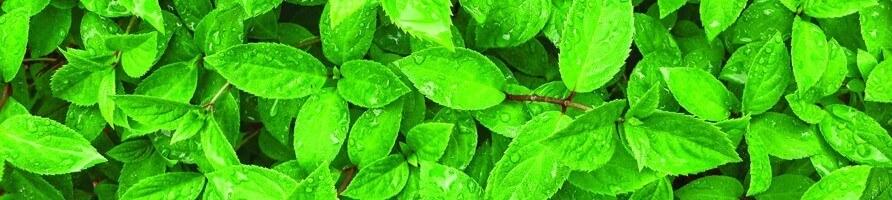 Pflanzen für den Wald im Einmachglas - growitbox.com
