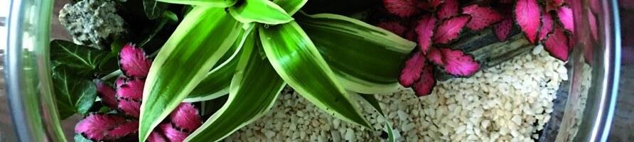 Plantes miniatures en pot - growitbox.com