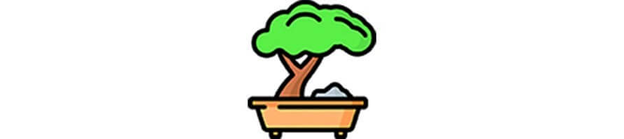 Bonsai trees for the forest in a jar - growitbox.com