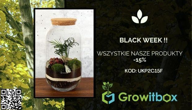 blackweek - growitbox