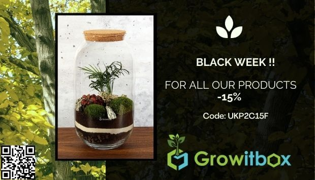 blackweek - growitbox