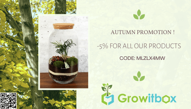 autumn promotion - growitbox